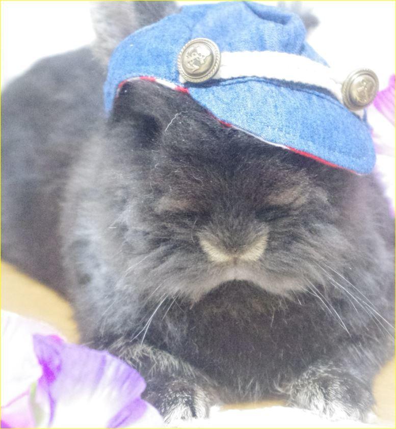 キャプチャ デニム系の帽子