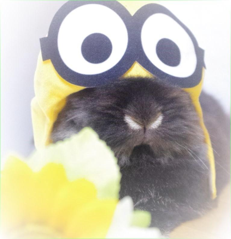 黄色 ミニオン