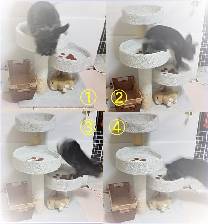 猫タワー (2)