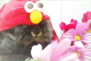 赤 キャラクター お花 (2)