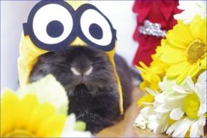 ミニオン きいろ お花
