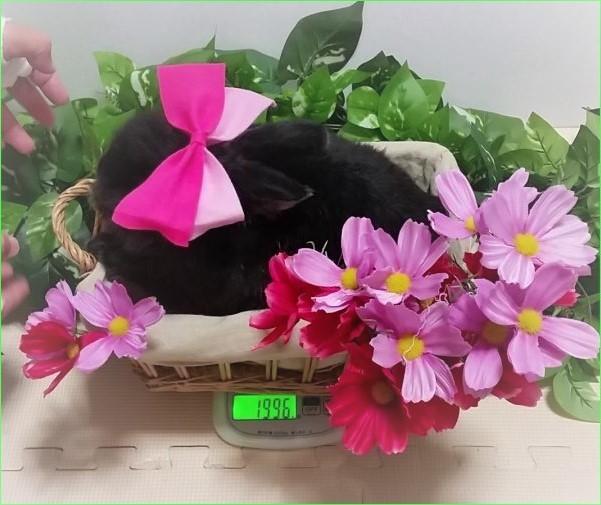 体重測定 ピンク りぼん お花 201811 (2)