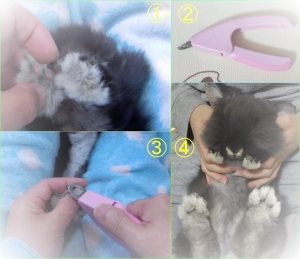 爪切り (3)