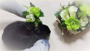 なでなで みどり お花 (2)