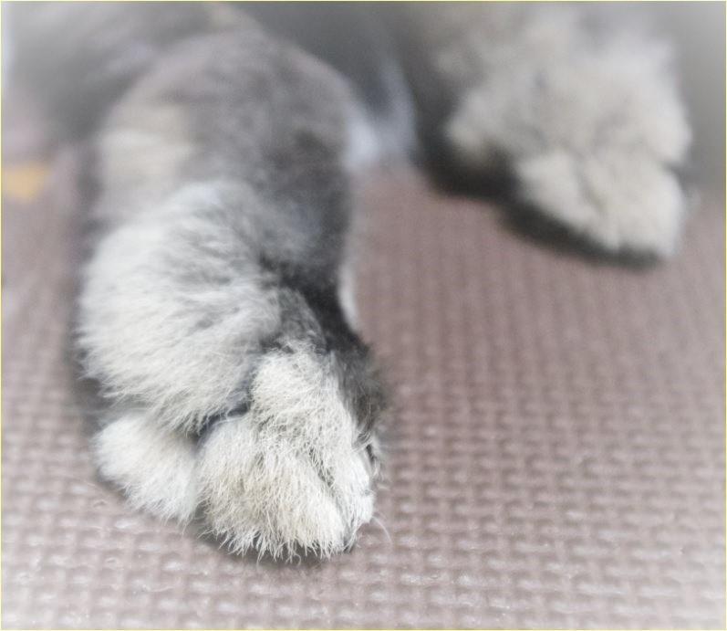 足の裏 お毛々 (3)