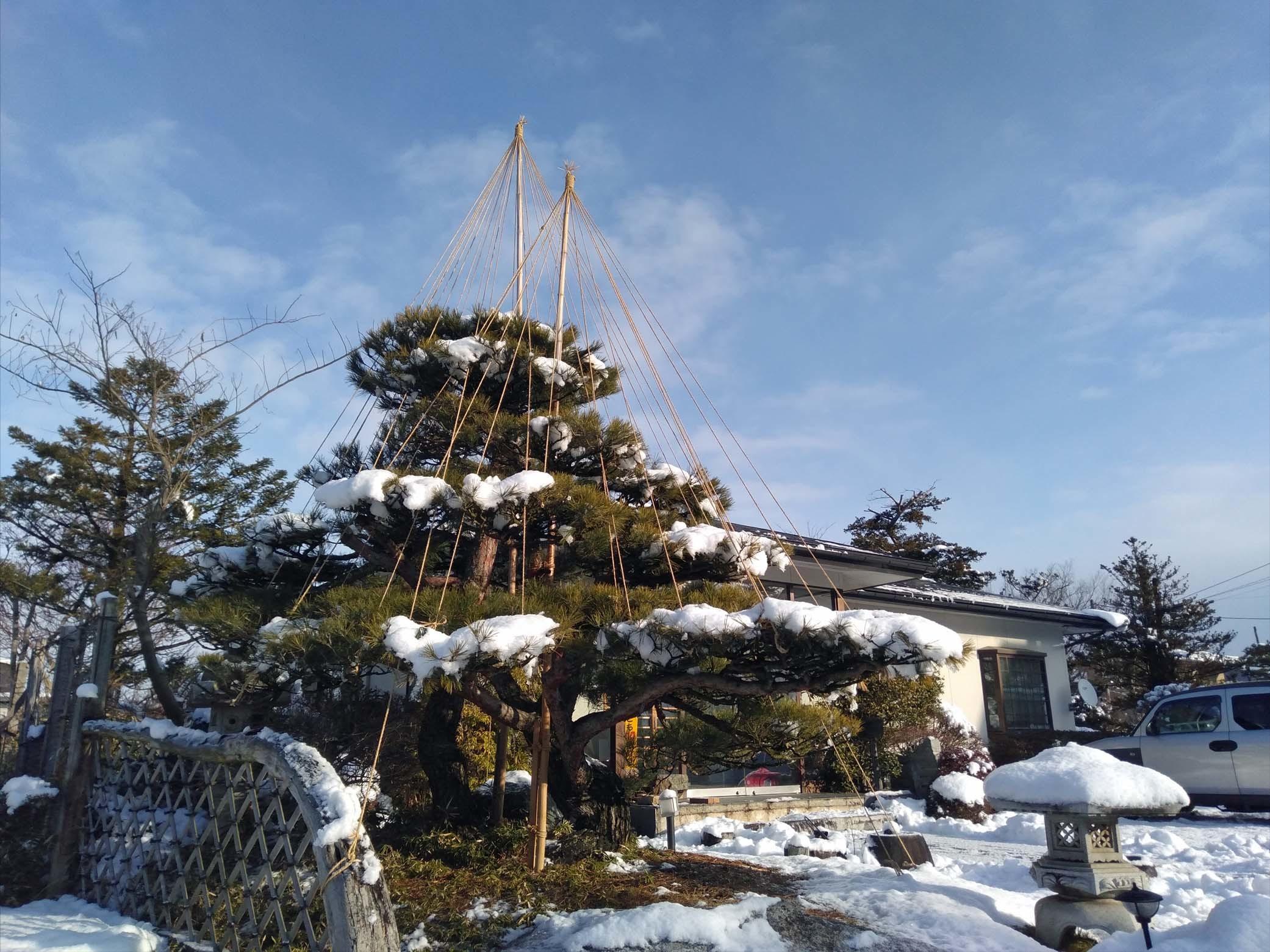 20191228 雪吊り