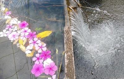 2019 10 川に花