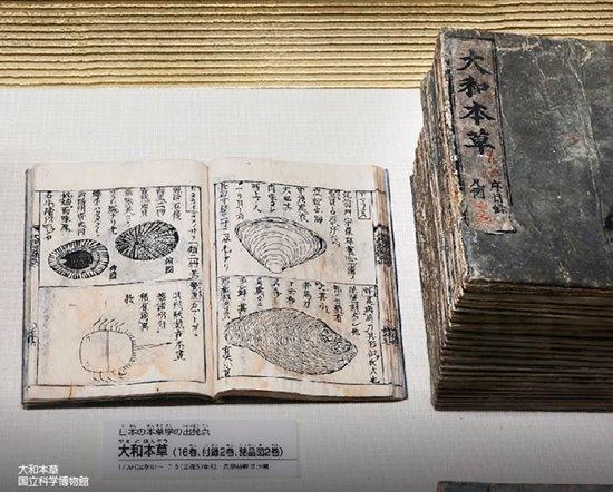 s-大和本草(国立科学博物館)