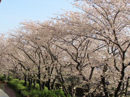 2020-2桜