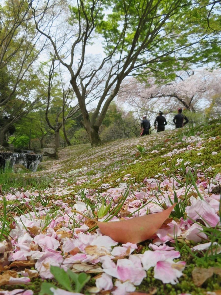 14「桜花の中を駈ける」
