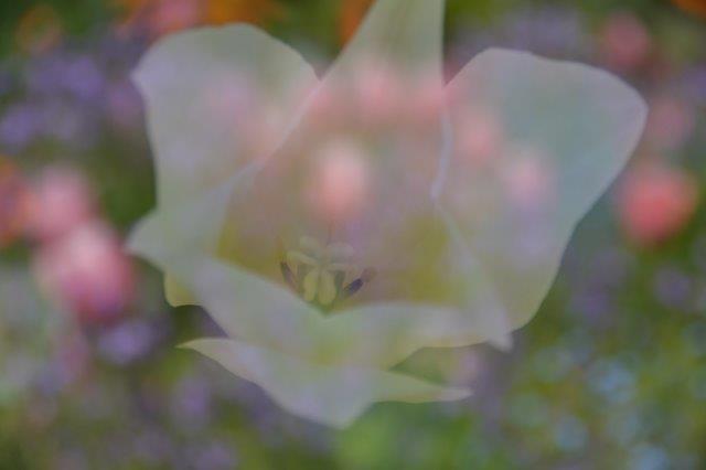 ⑥「春の香り」