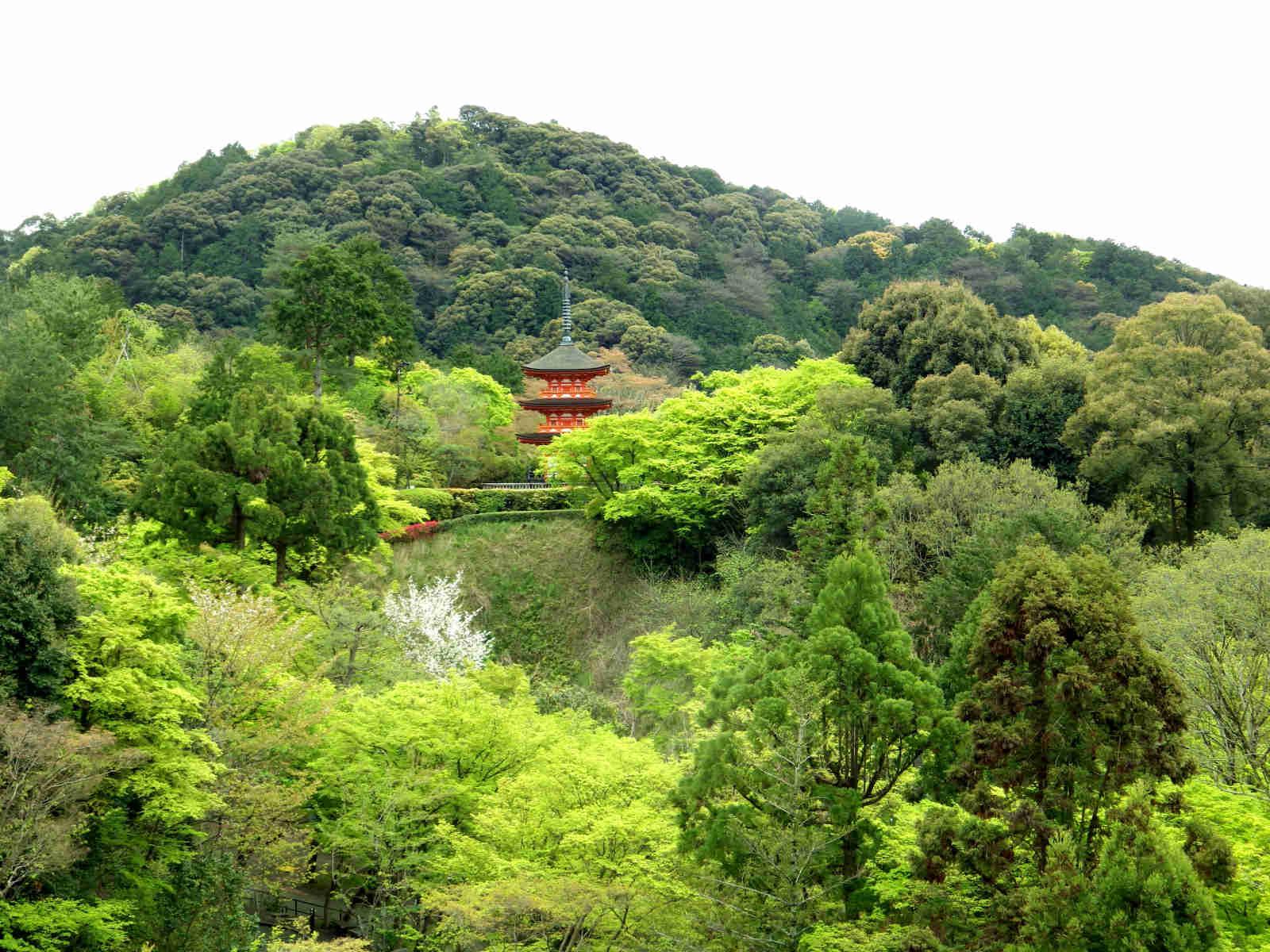 ⑧「京の春」