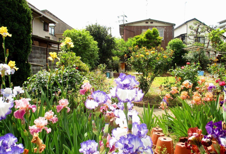 ㉑「花菖蒲と薔薇のお庭」