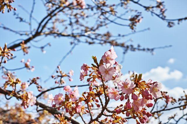 小さい春c