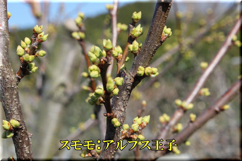 1ALouji200224_013.jpg