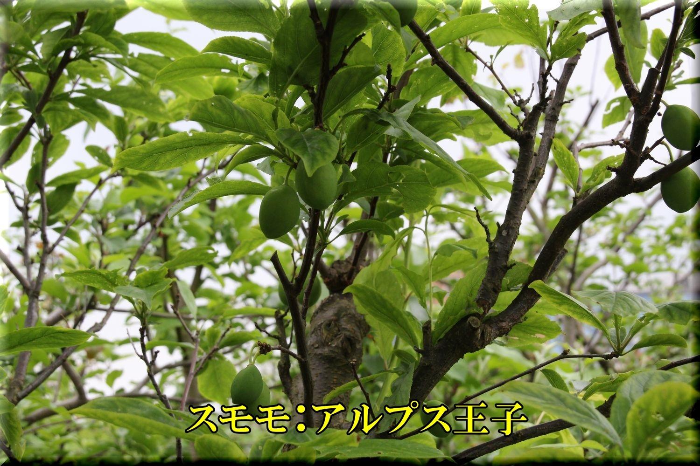 1ALouji200506_046.jpg