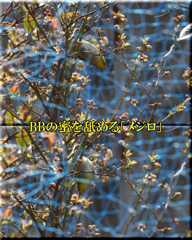 1BBmejiro200229_040.jpg