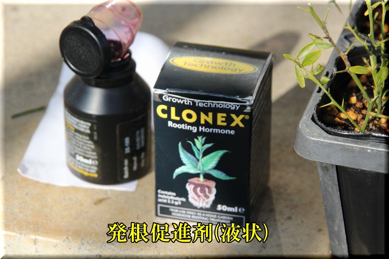 1CLONEX200119_014.jpg