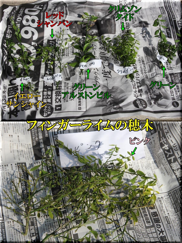 1FLhogi200119.jpg