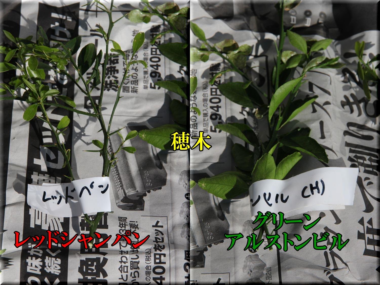 1FLhogi200119_002.jpg