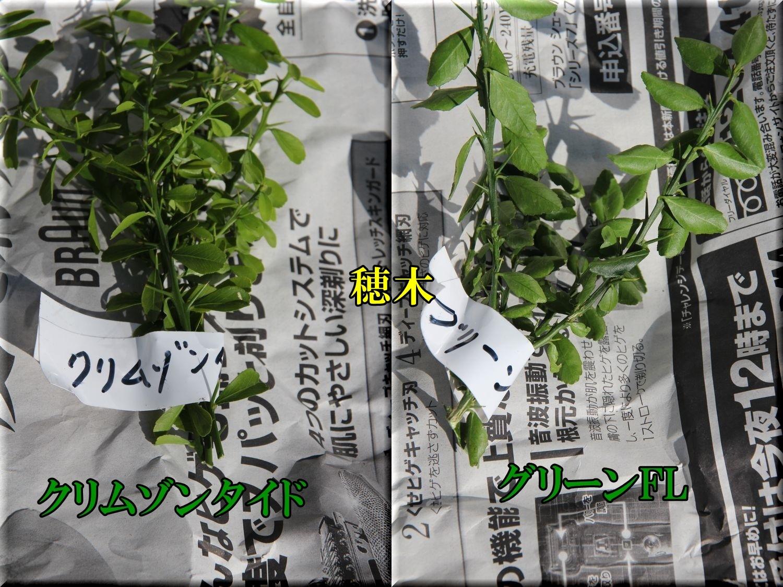 1FLhogi200119_004.jpg