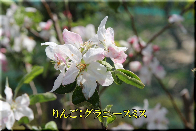 1G_smis200423_056.jpg