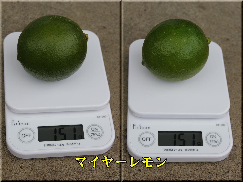 1Mylemon191017_003.jpg