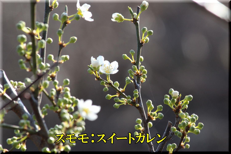 1SWkaren200229_011.jpg