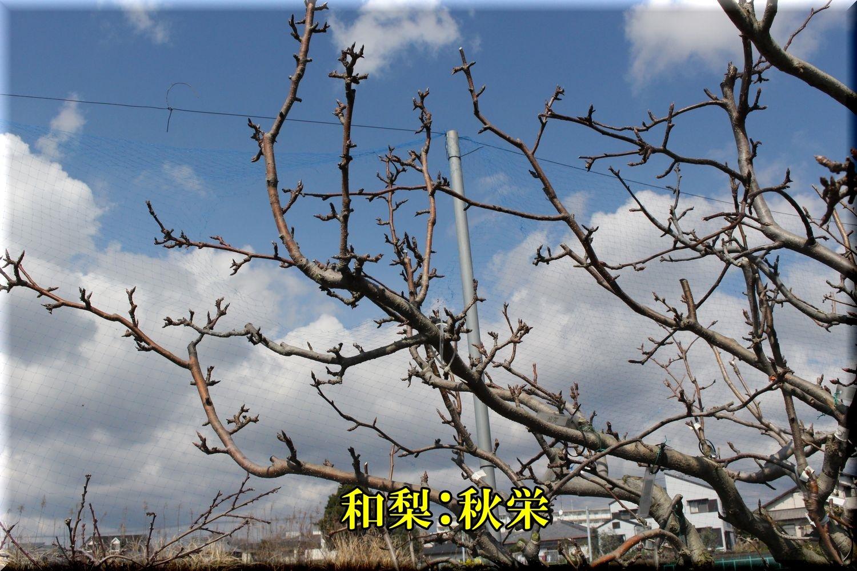 1akibae200303_014.jpg