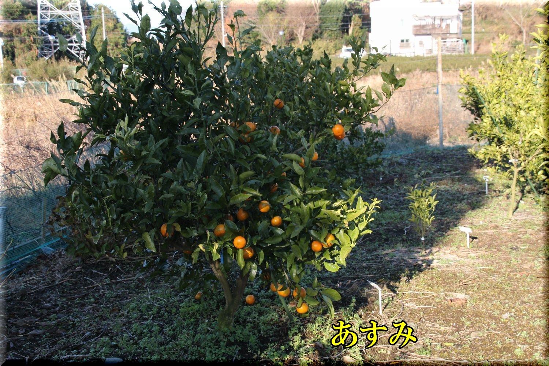 1asumi200113_006.jpg