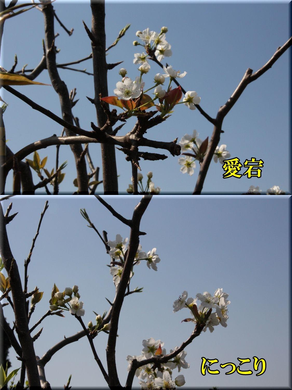 1atag_nikko200406_010.jpg