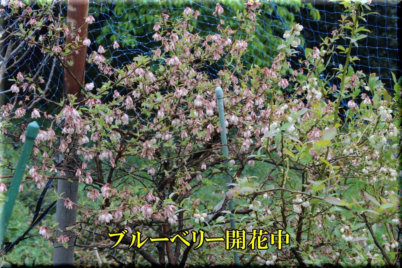 1bb200328_028.jpg