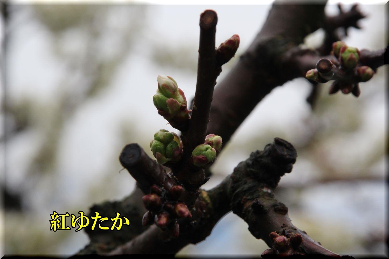 1beniyutaka200328_043.jpg