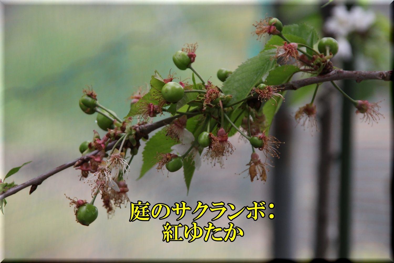 1beniyutaka200503_020.jpg