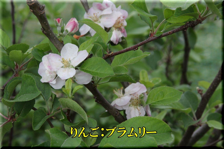 1bramury200506_011.jpg