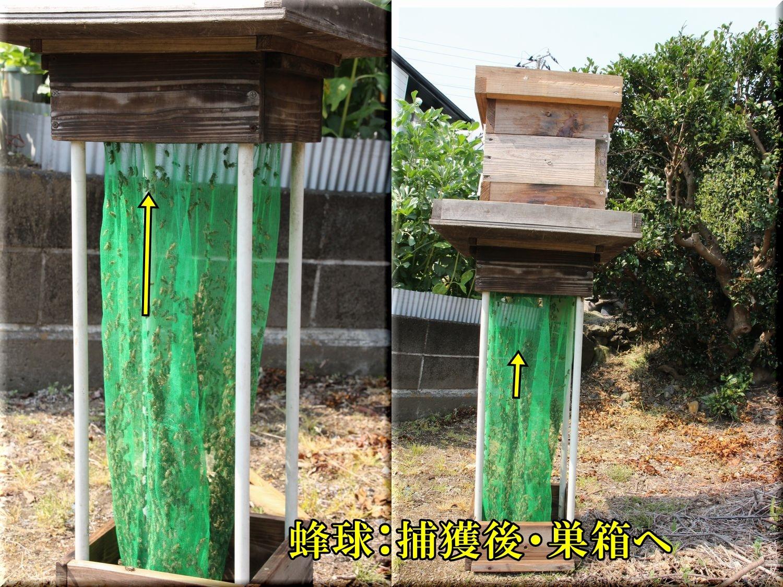 1bun_hokaku200416_116.jpg