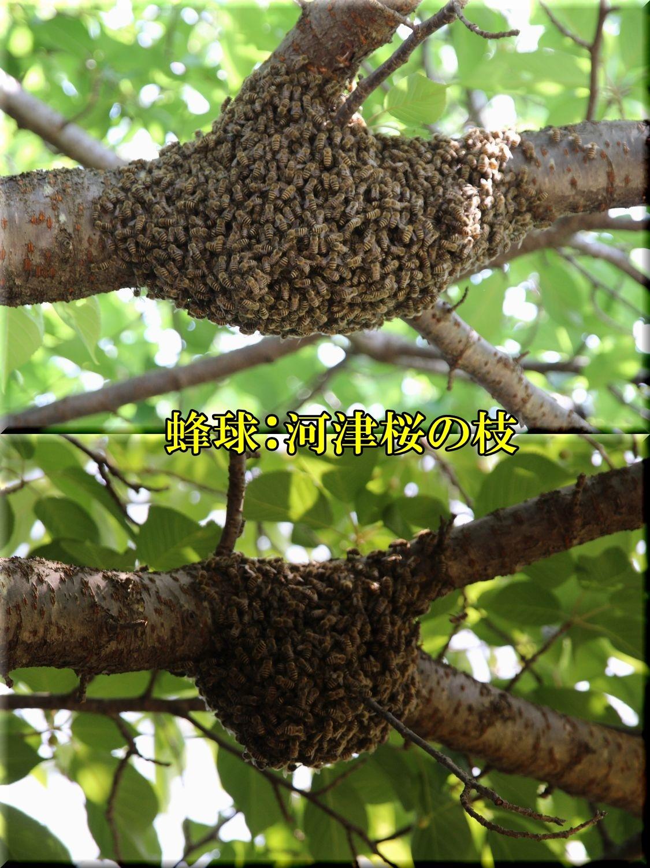 1bunpou200416_114.jpg