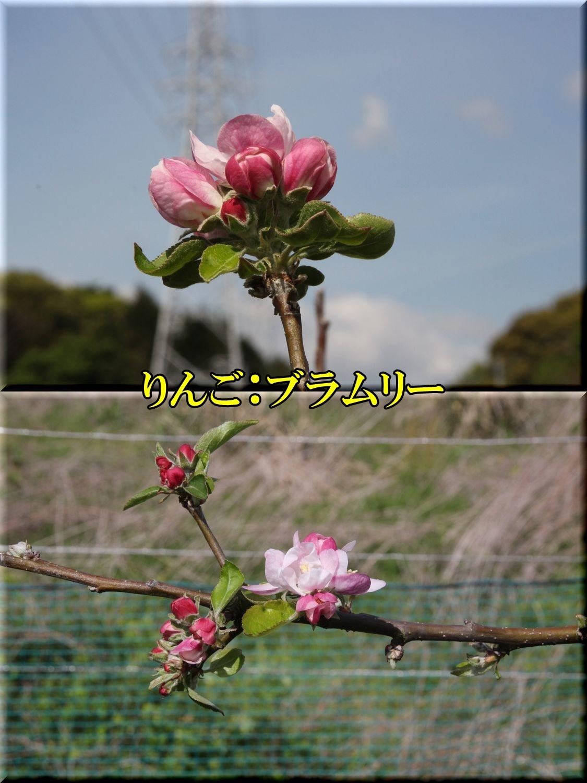1buramury200423_043.jpg