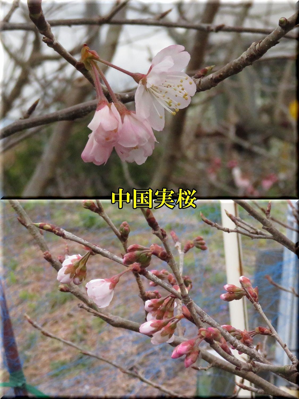 1dantioutou200310_011.jpg