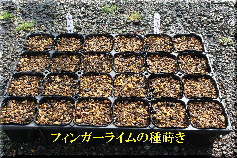 1fl200220_006.jpg