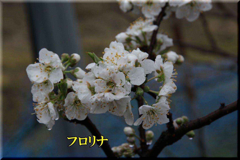 1frorina200328_049.jpg