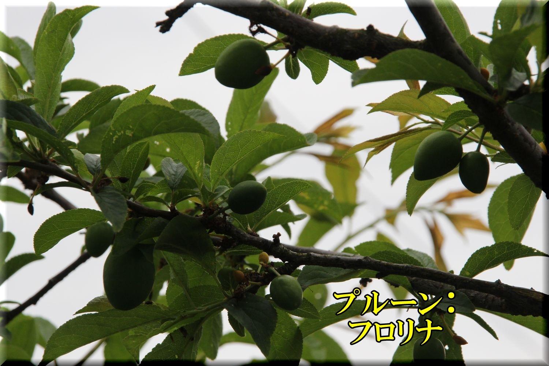 1frorina200503_034.jpg