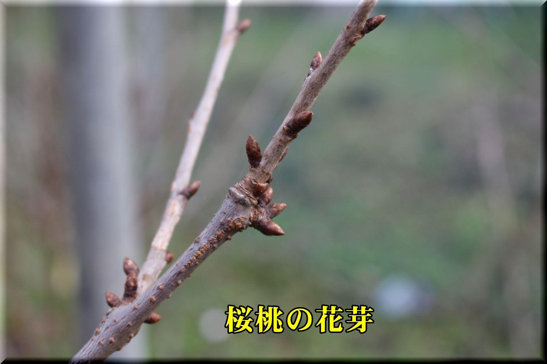 1haname191226_008.jpg