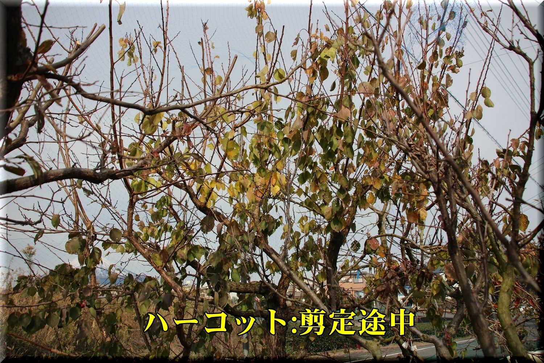 1harcot191211_001.jpg