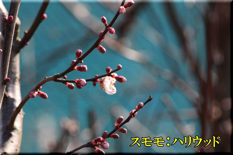 1hariwood200229_016.jpg