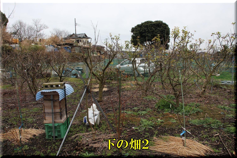 1hatake200127_010.jpg