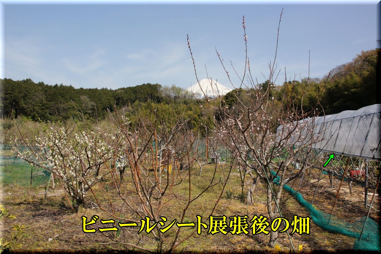 1hatake200321_017.jpg