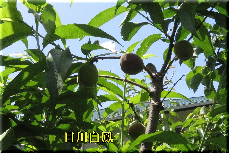 1hikawahaku200524_041.jpg