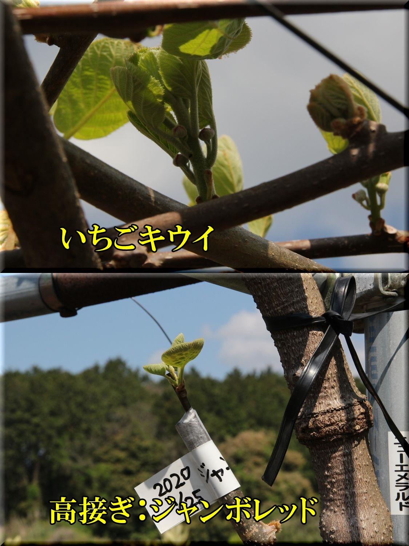 1itigi_JR200406_052.jpg