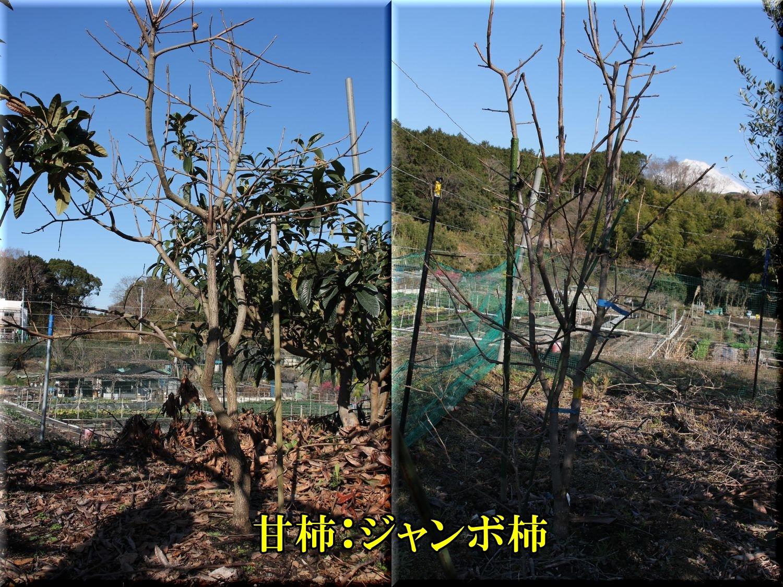1jyanbokaki200205_008.jpg